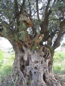 olivierg